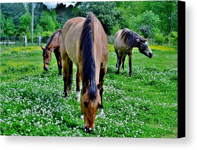 Horses Canvas Print featuring the photograph Horses In The Meadow by Eileen Brymer