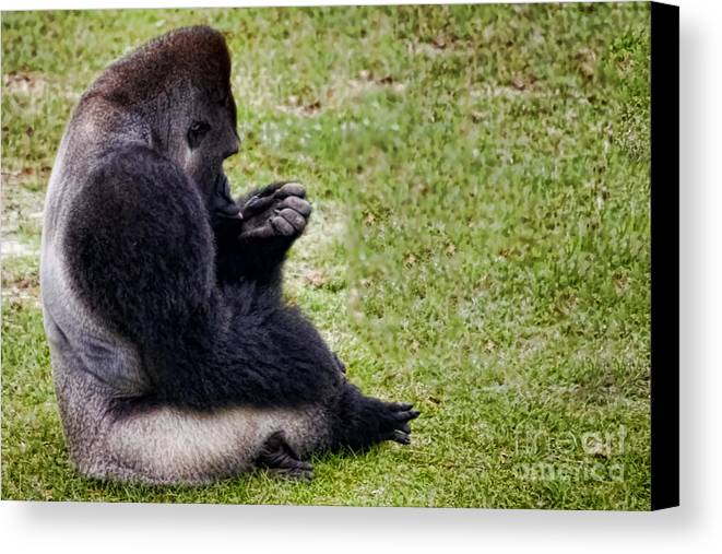 Gorilla Canvas Print featuring the photograph I Need A Manicure by Gaby Swanson