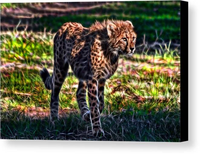#cheetah Canvas Print featuring the photograph I See Food...maybe by Miroslava Jurcik