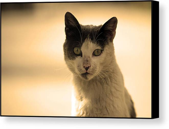 Photographer Canvas Print featuring the photograph I'm The Boss by Jez C Self