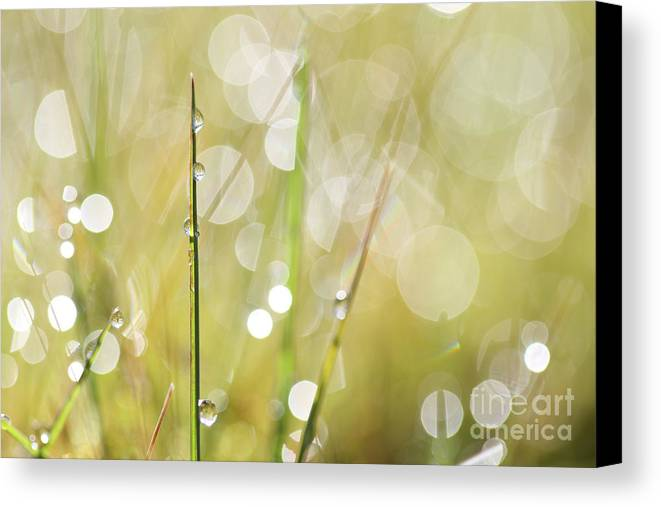 Meadow Canvas Print featuring the photograph In A Meadow by Jana Behr