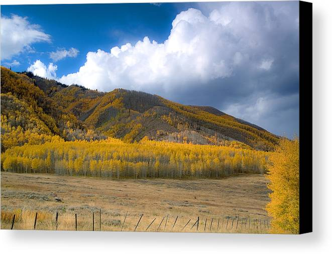 Colorado Fall Canvas Print featuring the photograph In Autumn Light by Tim Reaves