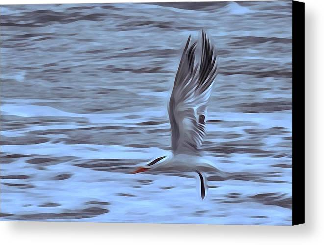 Seagull Canvas Print featuring the photograph In Flight by Patricia Black