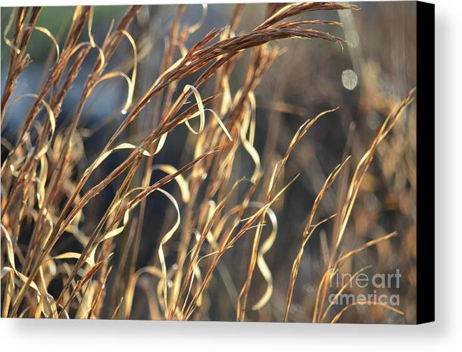 In The Beauty Of Morning Canvas Print featuring the photograph In The Beauty Of Morning by Maria Urso