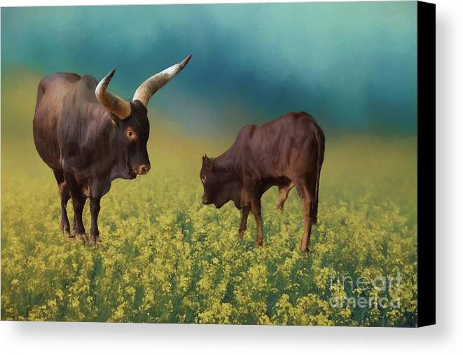 Ankole Longhorns Canvas Print featuring the photograph In The Canola Field by Eva Lechner