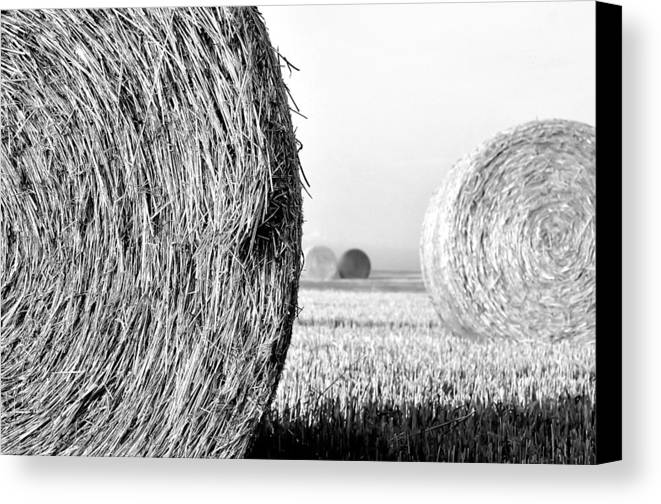 Black And White Canvas Print featuring the photograph In The Hay -black And White by Dana Walton