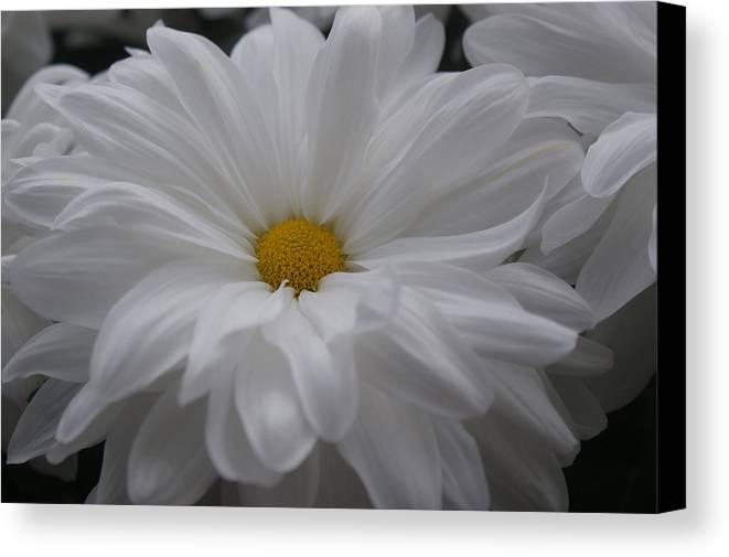 Flower Canvas Print featuring the photograph Ivory Snow by Kat Dee