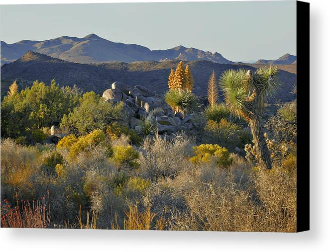 Sunset Canvas Print featuring the photograph Joshua Tree National Park In California by Christine Till