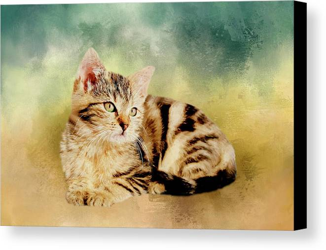 Kitten Canvas Print featuring the painting Kitten - Painting by Ericamaxine Price