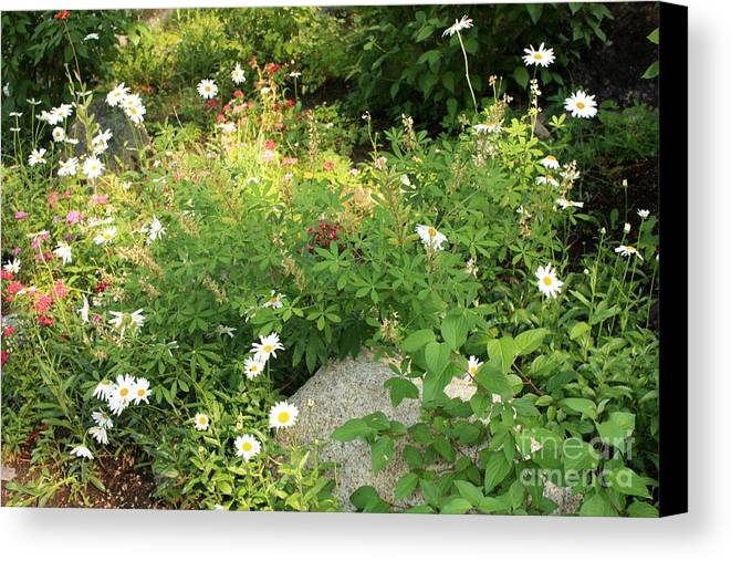Lake Tahoe Canvas Print featuring the photograph Lake Tahoe Flower Garden by Carol Groenen
