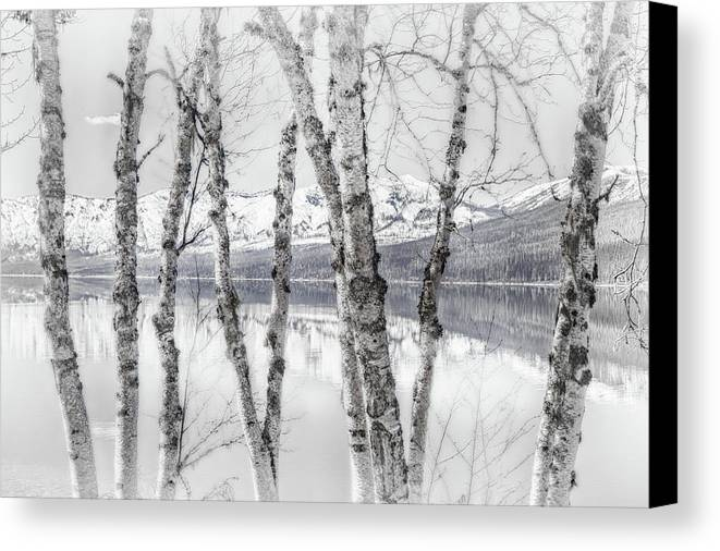 Birch Canvas Print featuring the photograph Last Of Winter On Lake Mcdonald by Harvey Jewett