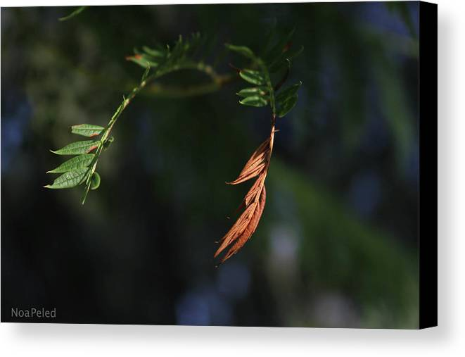 Canvas Print featuring the photograph Leaves by Noa Peled