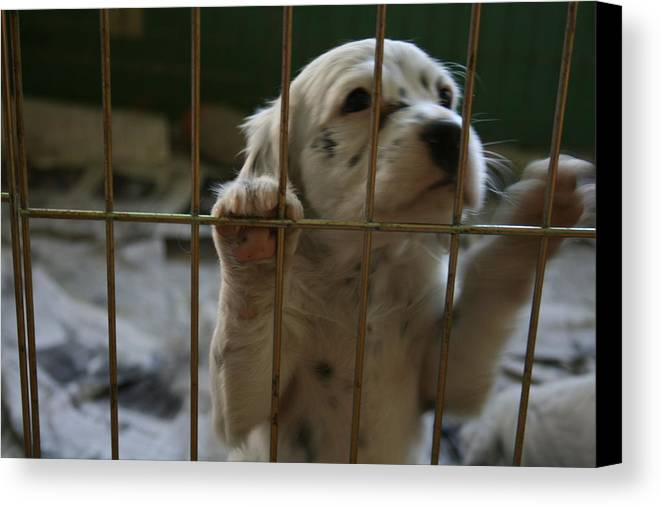 Puppy Canvas Print featuring the photograph Let Me Out by Jeff Porter
