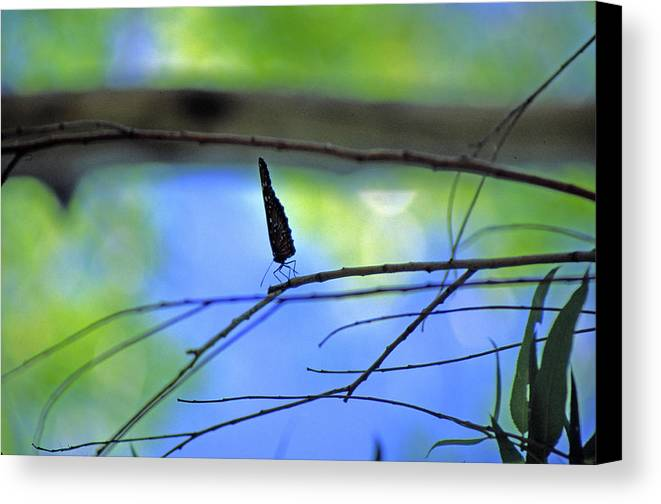Butterfly Canvas Print featuring the photograph Life On The Edge by Randy Oberg