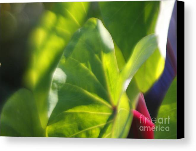 Green Canvas Print featuring the photograph Light II by Katherine Morgan