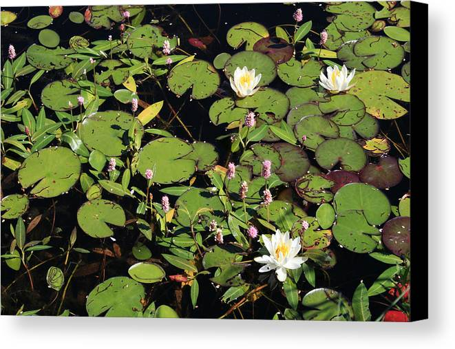 Lilypads Canvas Print featuring the photograph Lily Worlds Two by Alan Rutherford