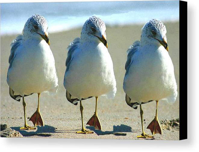 Beach Canvas Print featuring the photograph Line Dancing by MJ Cooper