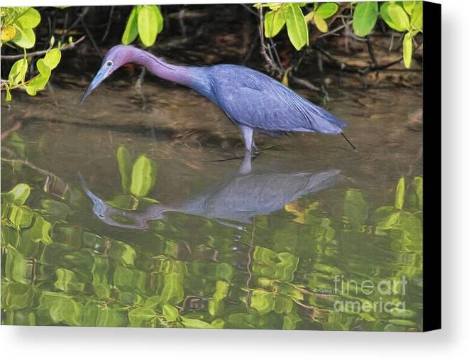 Heron Canvas Print featuring the painting Little Blue Fishing by Deborah Benoit