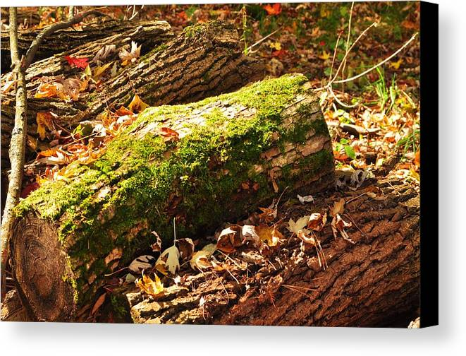 Canvas Print featuring the photograph Logs by Puzzles Shum