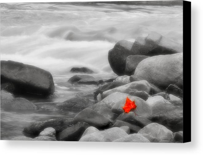 Leaf Canvas Print featuring the photograph Lone Leaf by Kenneth Krolikowski