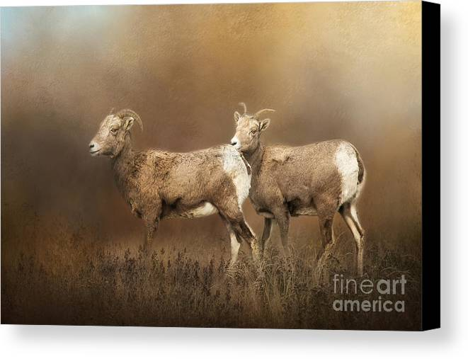 Mountain Sheep Canvas Print featuring the photograph Looking For The Herd by Cindy McDonald