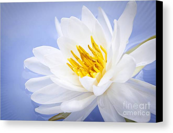 Lotus Canvas Print featuring the photograph Lotus Flower by Elena Elisseeva