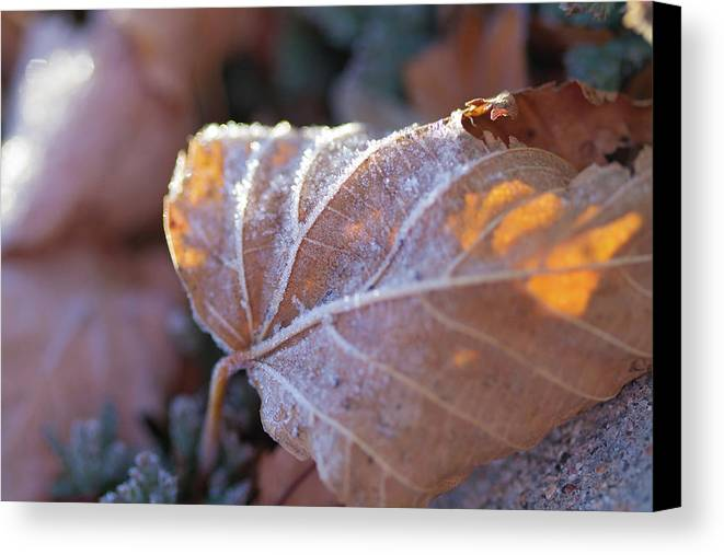 Sky Is The Limit Images Canvas Print featuring the photograph Macro Crystal 2 by Becca Buecher