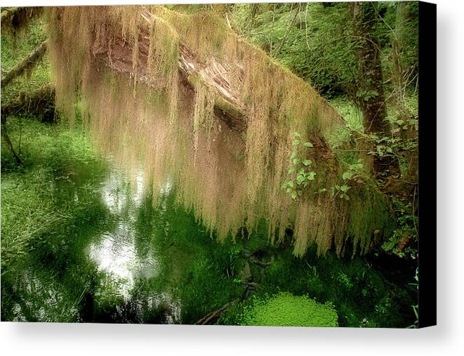 Rainforest Canvas Print featuring the photograph Magical Hall Of Mosses - Hoh Rain Forest Olympic National Park Wa Usa by Christine Till