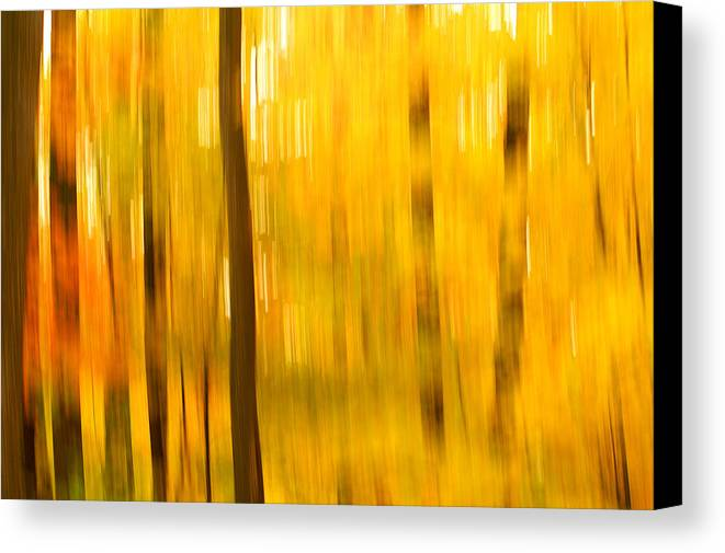 Abstract Photo Canvas Print featuring the photograph Maple Magic by Bill Morgenstern