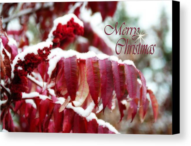 Christmas Card Canvas Print featuring the photograph Merry Christmas Red Leaves by Cathy Beharriell