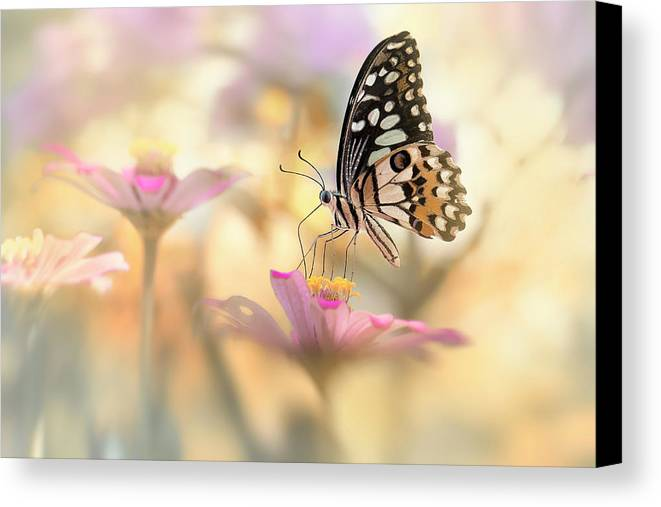 Macro Canvas Print featuring the photograph Morning Dance by Fauzan Maududdin