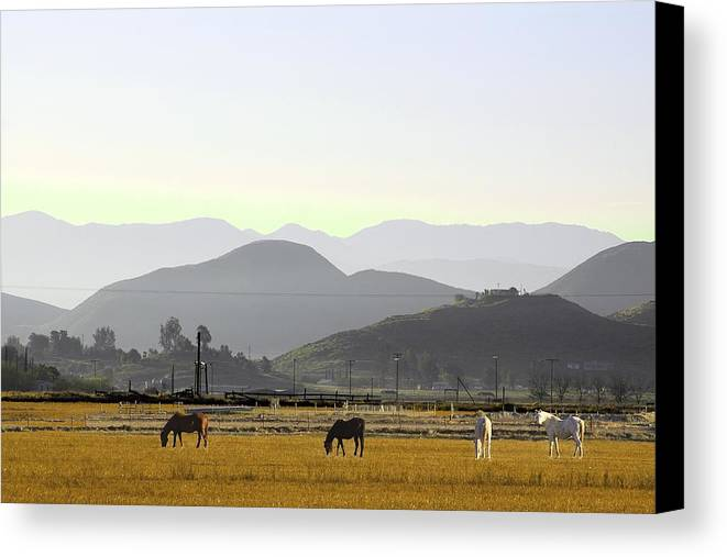 Morning In Country Canvas Print featuring the photograph Morning In Country by Viktor Savchenko