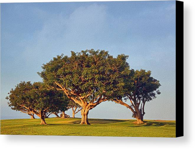 Trees Canvas Print featuring the photograph Morning Glory Txb by Theo O'Connor