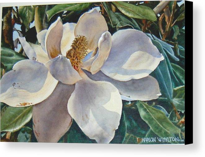 Flower Canvas Print featuring the painting Morning Magnolia by Marion Hylton