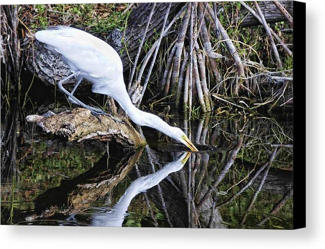 Egret Canvas Print featuring the photograph Morning Sip by Jody Lovejoy