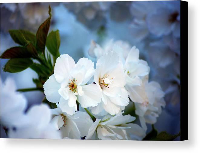 Nature Canvas Print featuring the photograph Mt. Fuji Cherry Blossoms by Emerita Wheeling
