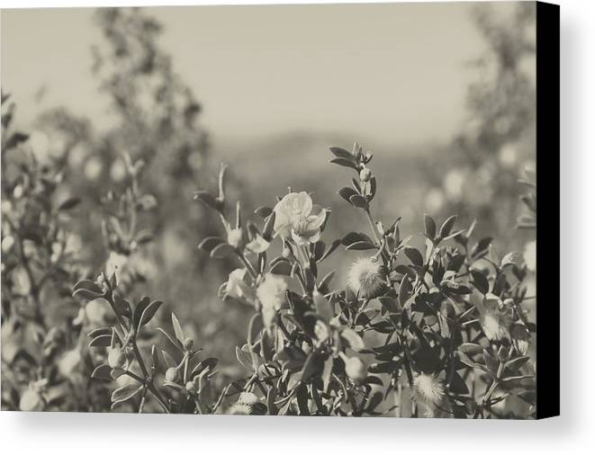 Nature Canvas Print featuring the photograph Muted Beauty 2 by Sarah Jane Thompson