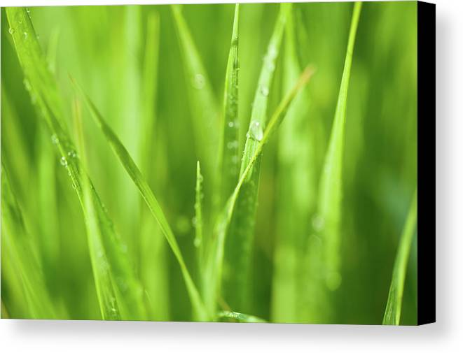 Illinois Canvas Print featuring the photograph Native Prairie Grasses by Steve Gadomski