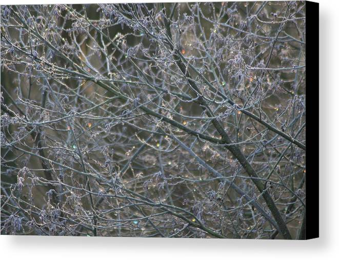 Tree Canvas Print featuring the photograph Natures Fairy Lights by Hannah Goddard-Stuart
