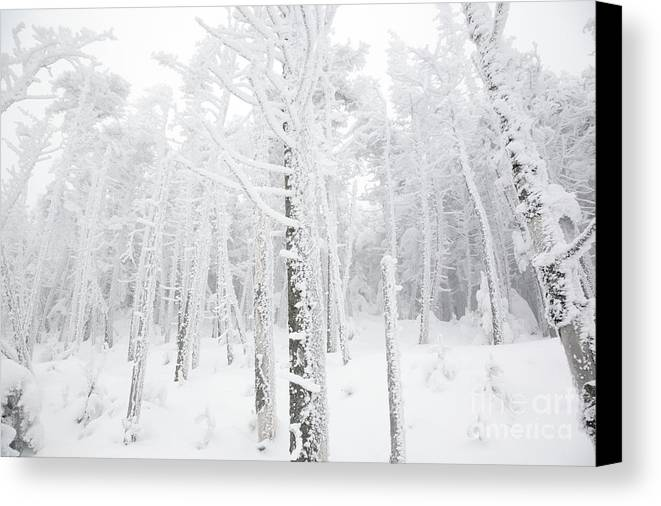 Snow Covered Canvas Print featuring the photograph New England - Snow Covered Forest by Erin Paul Donovan