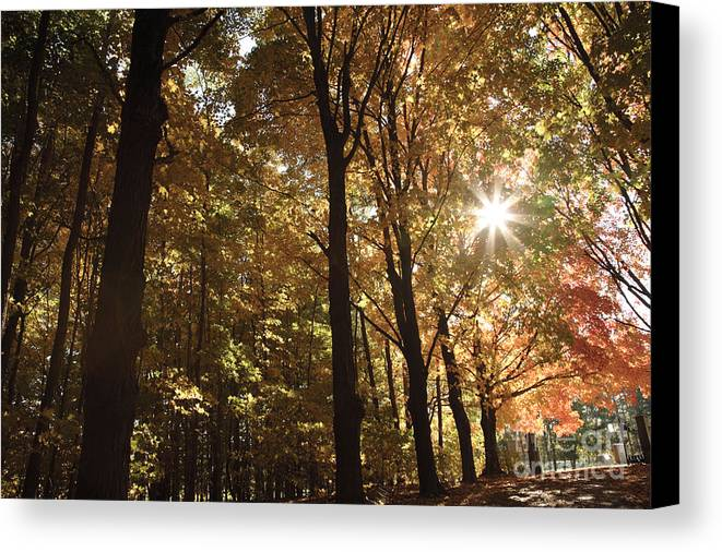 Forest Canopy Canvas Print featuring the photograph New England Autumn Forest by Erin Paul Donovan