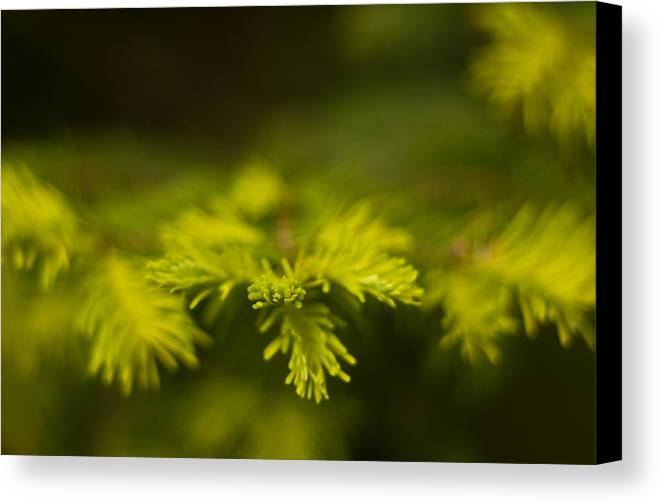 Blur Canvas Print featuring the photograph New Growth by R J Ruppenthal