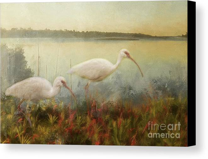 North Carolina Canvas Print featuring the photograph North Carolina Ibis by Kelley Freel-Ebner