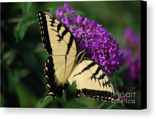 Butterfly Canvas Print featuring the photograph Nothing Is Perfect by Debbi Granruth