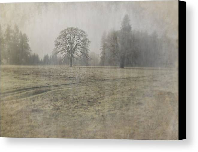 Oak Field Canvas Print featuring the photograph Oak Field by Nichon Thorstrom