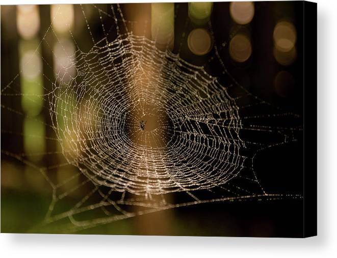 Spider Web Canvas Print featuring the photograph Oh What Tangled Webs.... by James Fitterer