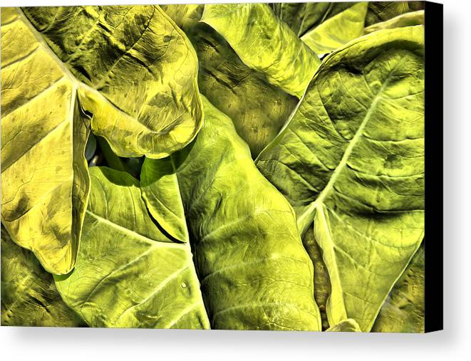 Plant Canvas Print featuring the photograph Old Plant by Dennis Sullivan