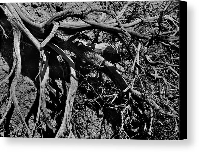 Landscape Canvas Print featuring the photograph Old Sagebrush by Ron Cline