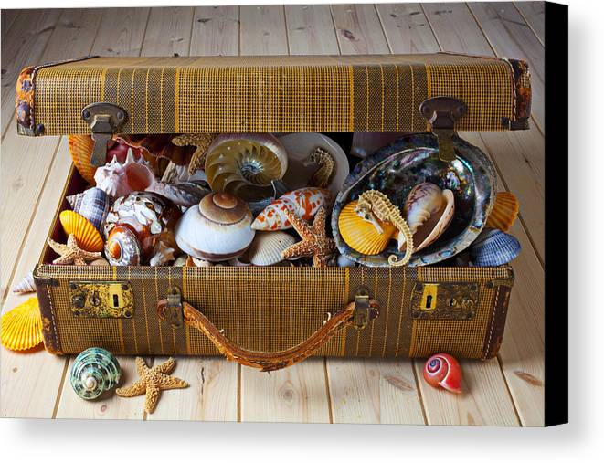 Suitcase Full Sea Shells Travel Canvas Print featuring the photograph Old Suitcase Full Of Sea Shells by Garry Gay