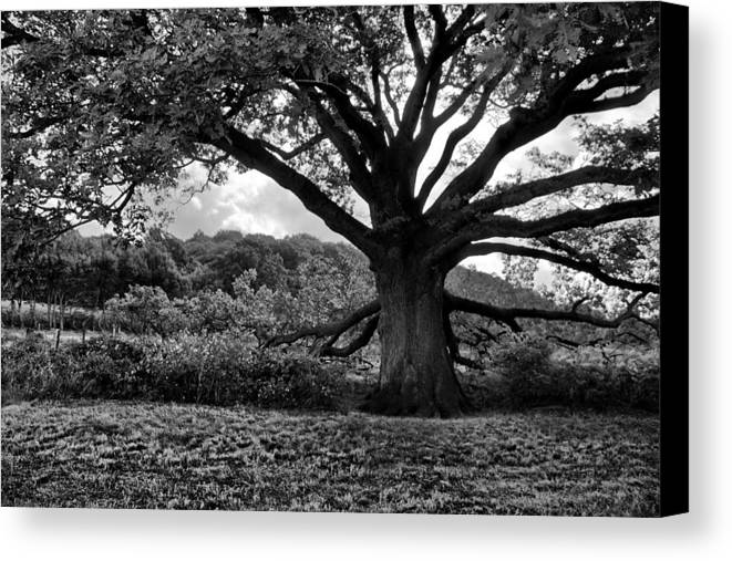 Tree Canvas Print featuring the photograph Old Tree In Germany by Edward Myers